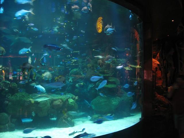 Casino submarino en Florida, diversión bajo el mar